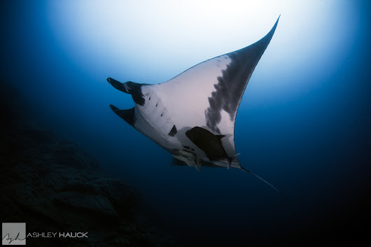 A Whale Shat On Me, But All I Saw Were Manta Rays - Blog – Ashley Hauck Photography