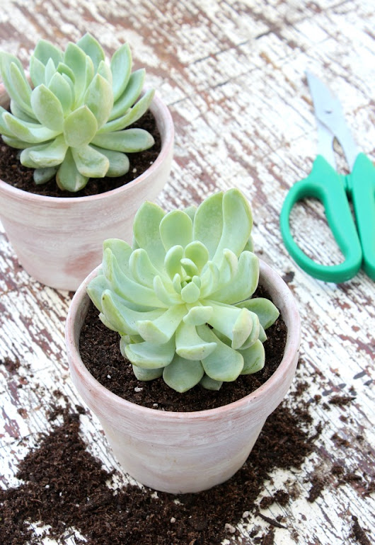 Succulents in Weathered Pots - Satori Design for Living