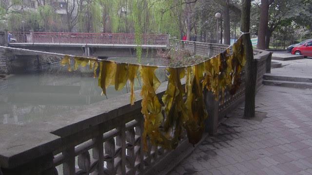 Hanging the seaweed, Hongguang