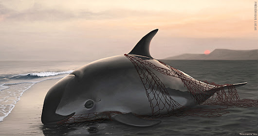 Court of Appeals Upholds US Ban on Mexican Seafood Imports to Save Vaquita | Animal Welfare Institute