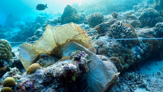 Oceanic plastic trash conveys disease to coral reefs | Cornell Chronicle