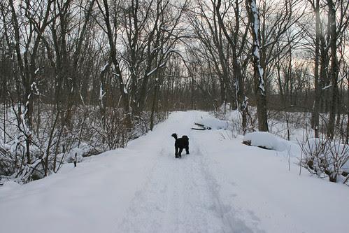 snow 049