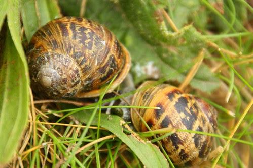 Snails at Tintagel