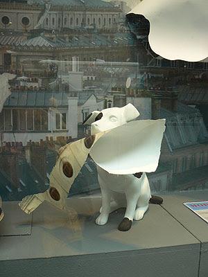 chien au papier peint.jpg