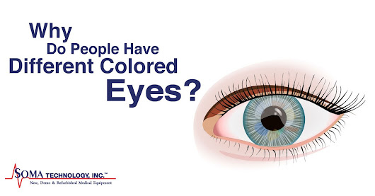 Why Do People Have Different Colored Eyes?