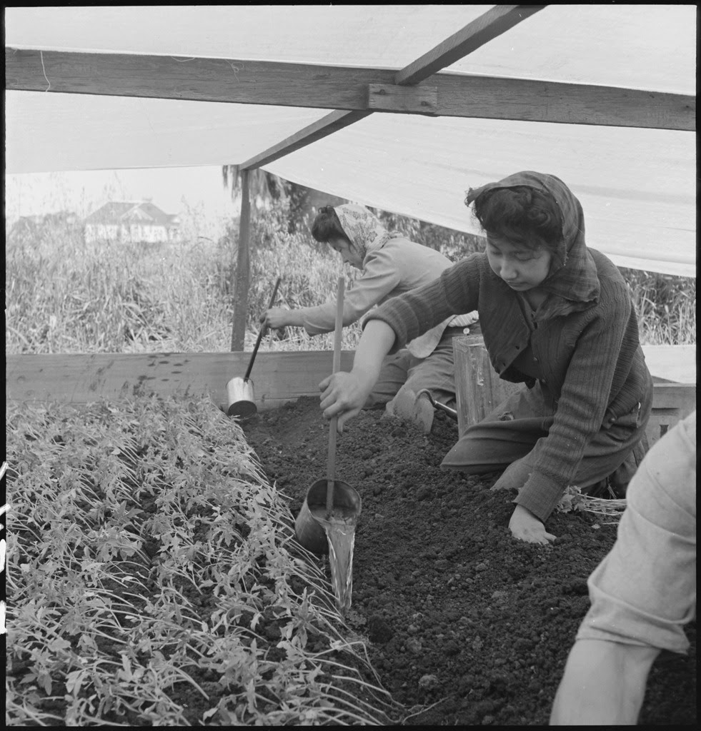 http://upload.wikimedia.org/wikipedia/commons/thumb/d/d0/San_Leandro%2C_California._Watering_young_plants_on_a_farm_in_Alameda_County%2C_California%2C_prior_to_ev_._._._-_NARA_-_536437.tif/lossy-page1-981px-San_Leandro%2C_California._Watering_young_plants_on_a_farm_in_Alameda_County%2C_California%2C_prior_to_ev_._._._-_NARA_-_536437.tif.jpg