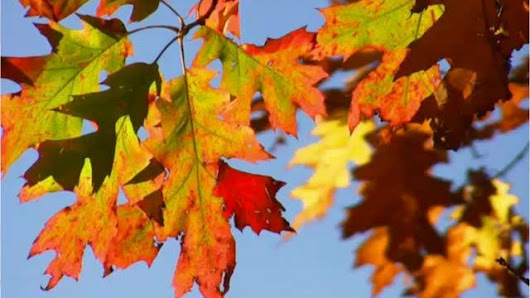 Video: Why do leaves change color?