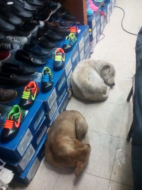 Una zapatería abre sus puertas para albergar a los perritos callejeros en medio de la lluvia