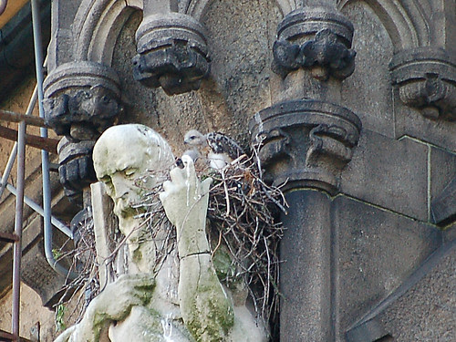 Cathedral Red-Tail Baby