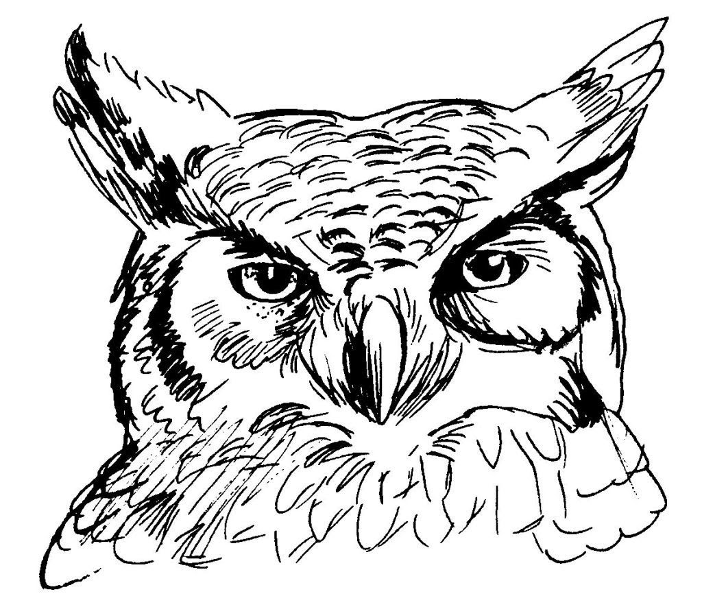 Dessin coloriage animal hibou