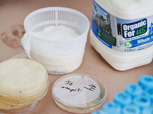 A produção deste queijo utilizou bactérias retiradas da axilas (armpit, em inglês)  (Foto: GROW YOUR OWN...LIFE AFTER NATURE at Science Gallery at Trinity College Dublin)