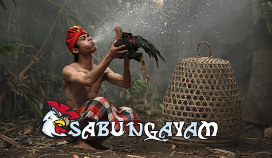 Sabung Ayam Online Live Streaming Video Indonesia