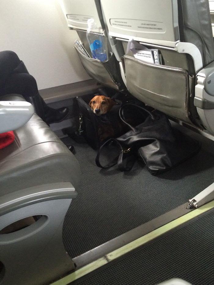 Ouvert un sac de Jerky sur un avion. Ce petit gars a surgi et m'a surpris