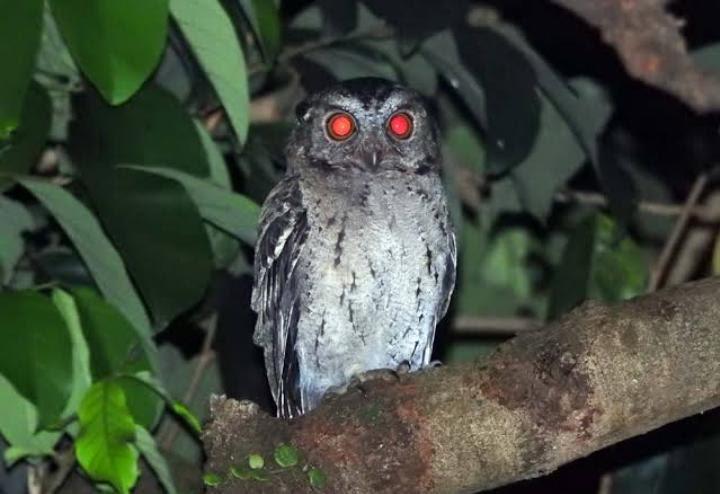 44+ Gambar Kolase Binatang Burung Hantu HD Terbaru