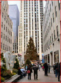 The famous Christmas tree in Rockefeller Plaza