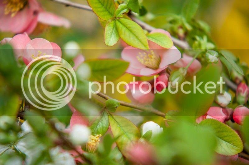 photo spring1_zpsb171348e.jpg