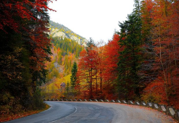 Here Are The 4 Best Cars For A Fall Getaway
