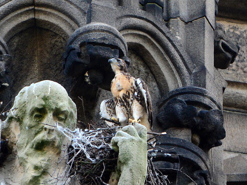 Still in the Nest