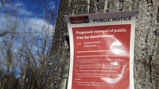 Chopping down of 277 trees in North Glenmore Park shocks some nearby residents
