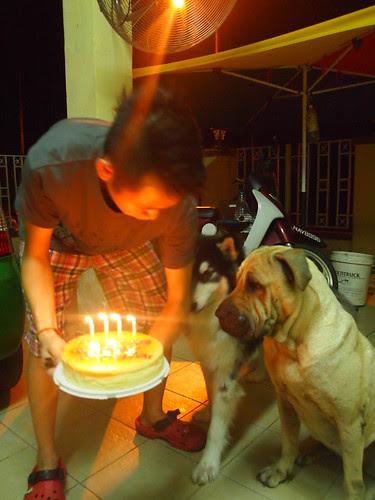 Mumble's and Joker's Birthday