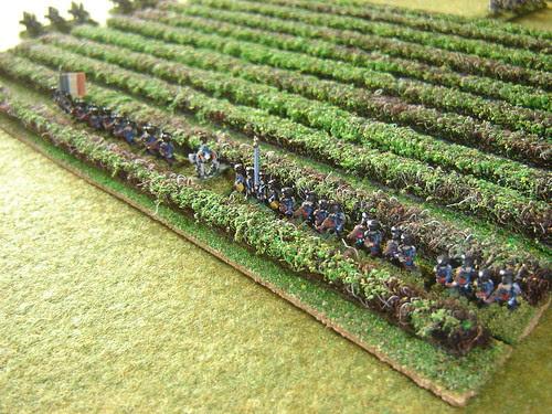 Light Infantry in vineyards