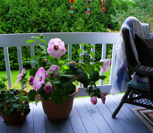 Perfect Porch Flower