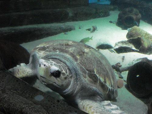 Atlantis013