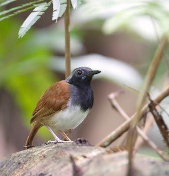 http://avesphoto.com/website/pictures/ABDWBL-1.jpg