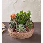 Cactus Dish Garden Large