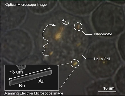 Nanomotors are controlled, for the first time, inside living cells (w/ video)