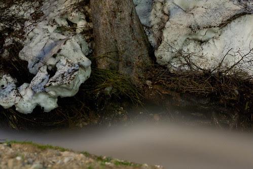 A wild stream