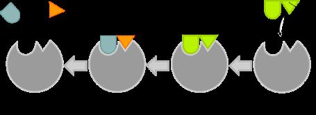 فرضية القفل والمفتاح لفيشر لتوضيح آلية عمل الأنزيمات.