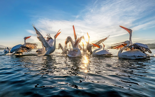 Fishermen Get up Close and Personal with Lake Kerkini's Pelicans - Greece Is