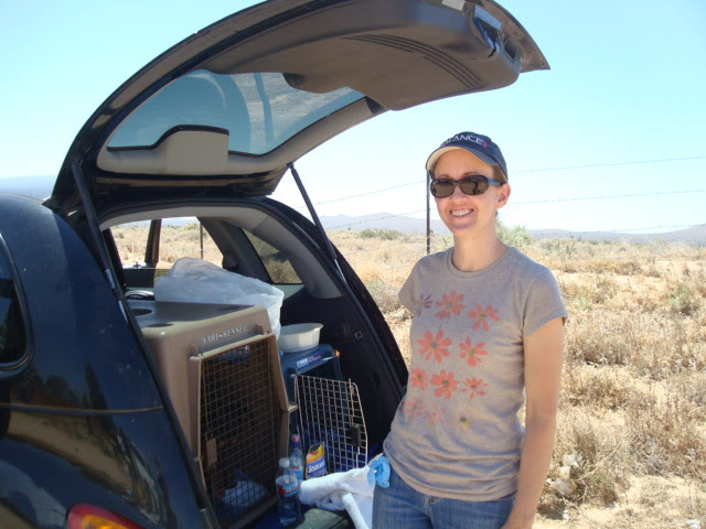 Summer 2009 Newsletter - Buddha Dog Animal Massage