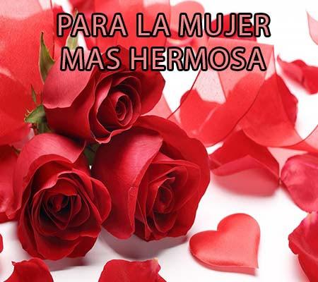 Imagenes De Petalos De Rosas Con Frases Rosas De Amor