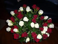 2*24 rozen