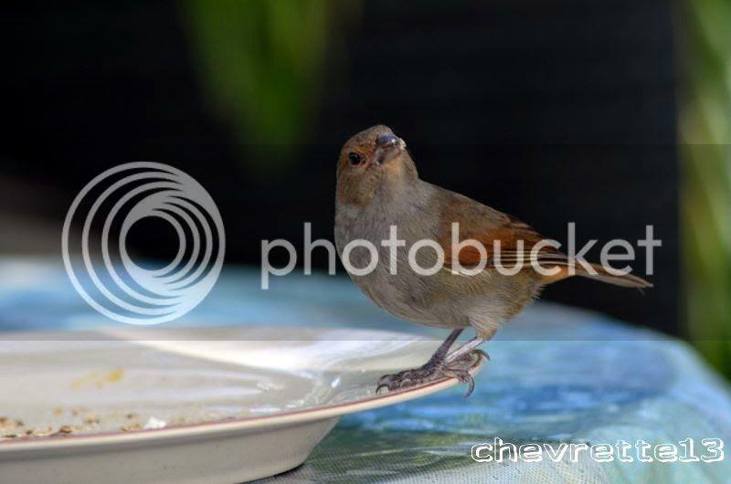 http://i1252.photobucket.com/albums/hh578/chevrette13/Guadeloupe/_DSC0917Copier_zps4ed3b789.jpg