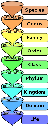 Scientific classification of living things use...