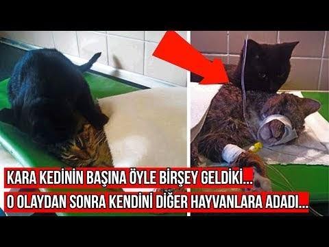 Veteriner Bu Kara Kediyi Uyutacaktı Fakat Sonrasında Mucizevi Bir Şey Oldu (VİDEO)