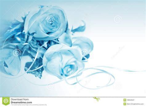 Rozen Op Blauwe Achtergrond Stock Afbeelding   Afbeelding