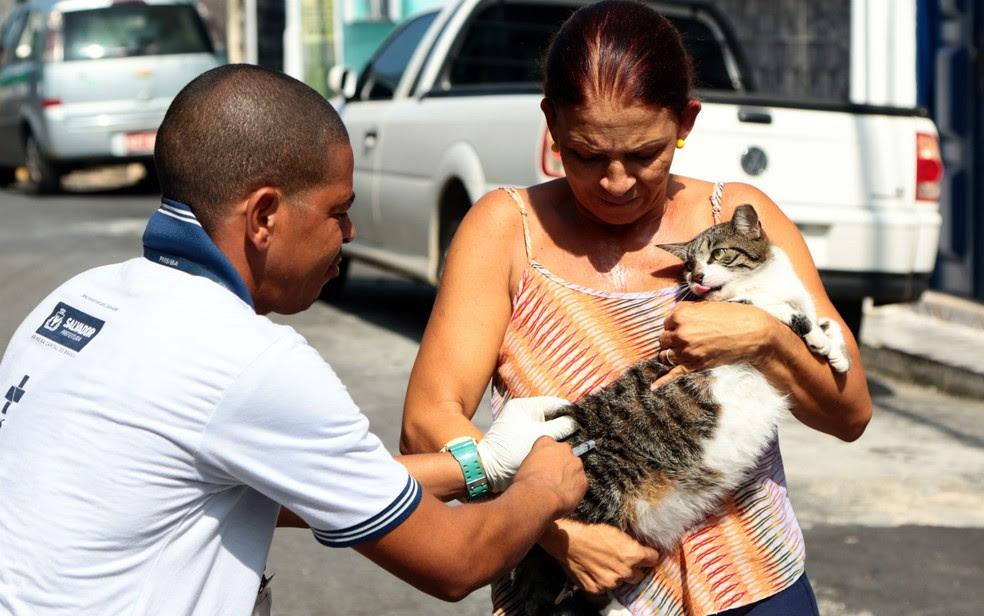 Durante vistoria de imóveis, cães e gatos são vacinados contra raiva (Foto: Bruno Concha/Secom)