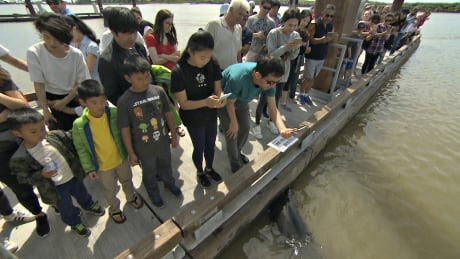 'Unbelievable': Dozens swarm dock where sea lion grabbed girl, despite warnings