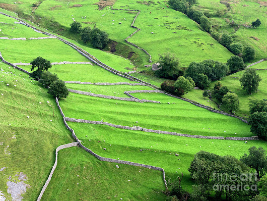 Dry Stone Walls In Malhamdale by Mark Sunderland