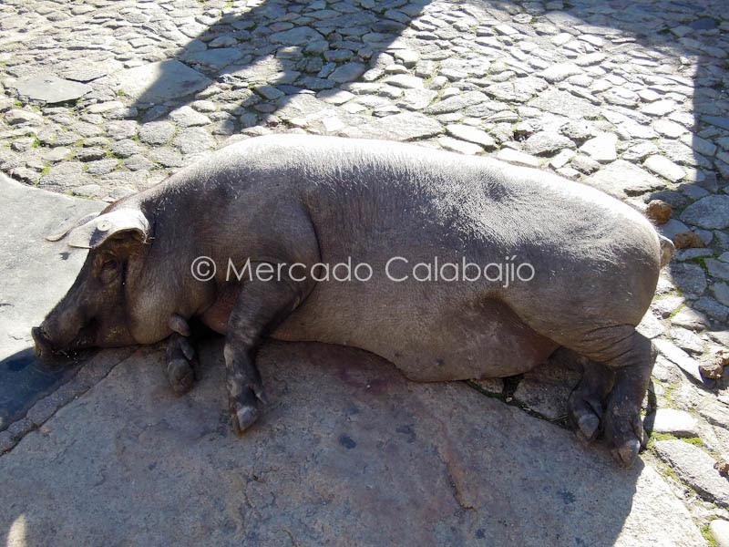 FIN DE SEMANA ALBERCA-10