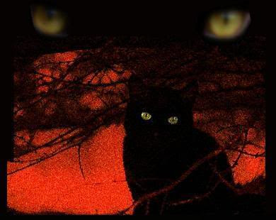 theblackcat_by_Velvet.jpg picture by ouz0