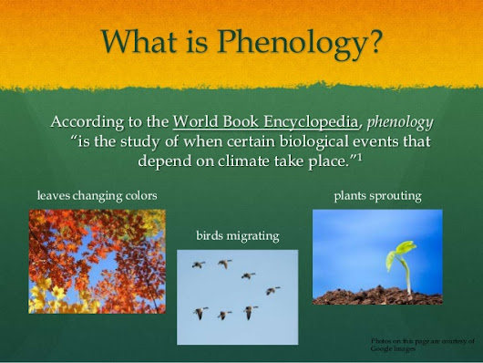 The USA National Phenology Network: Taking the Pulse of our Planet