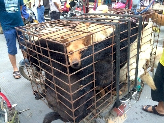 Activists Couldn't Stop 10,000 Dogs from Being Eaten Last Weekend in China | VICE United States