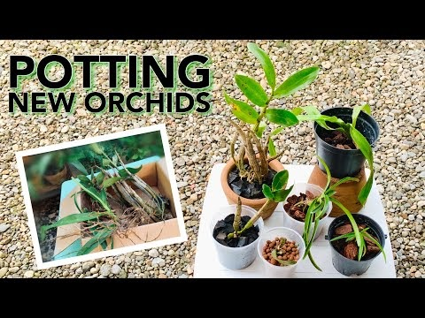 PLANTING/POTTING NEW ORCHIDS QUICK & SIMPLE DIFFERENT POTS, MEDIA & SETUP