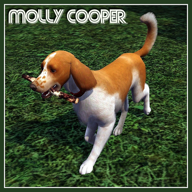 MollyCooper_covershot