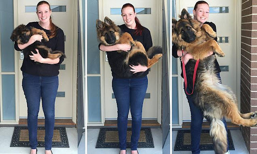 Couple document their dog's extraordinary growth spurt in photos